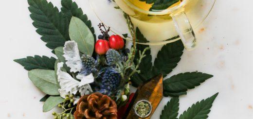 gesundeszentrum cbd tropfen biologisch 520x245 - CBD Tropfen aus biologischem Anbau • Schonend hergestellt & wirksam?
