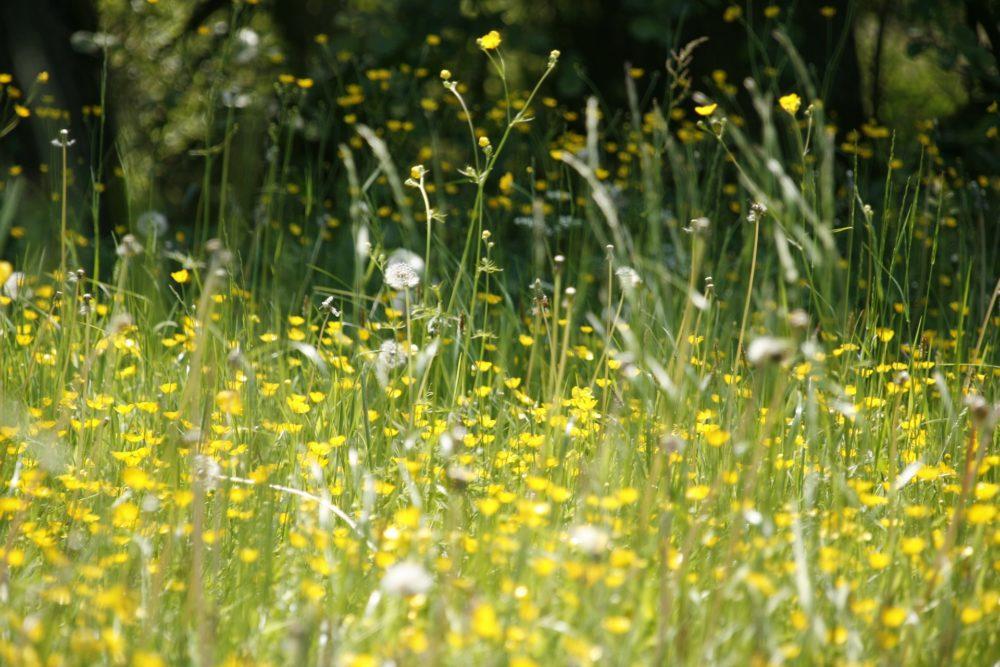 gesundeszentrum meadow 123280 1920bread cereal crop 461344woman 698948 1920 scaled - Hypo- und Desensibilisierung: Linderung für Pollenallergiker?