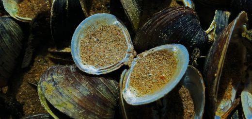 gesundeszentrum mussels 2056429 1920 520x245 - Arthrose Ernährung • Helfen Grünlippmuscheln die Beschwerden zu lindern?
