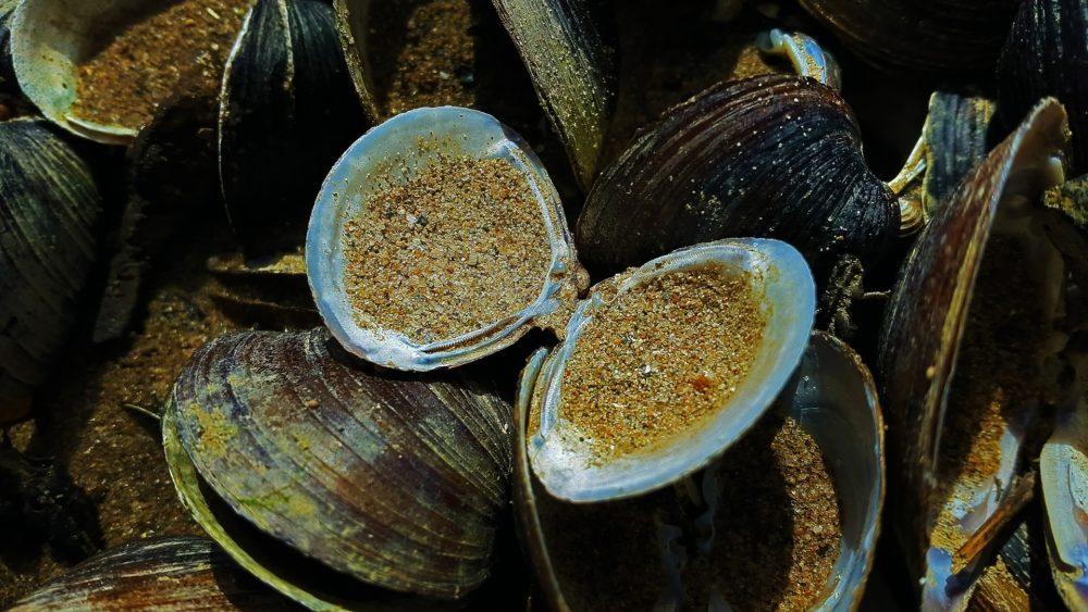 gesundeszentrum mussels 2056429 1920 scaled - Arthrose Ernährung • Helfen Grünlippmuscheln die Beschwerden zu lindern?