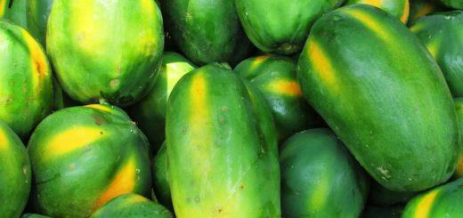 gesundeszentrum papaya 331280 1920 520x245 - Manju Fermentationsgetränk • Steigerung des Wohlbefindens?